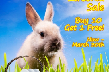Easter Zirconia Sale!!